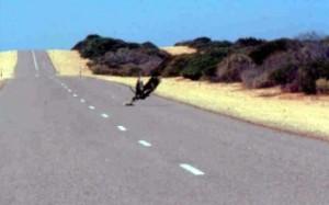 eagleonroad