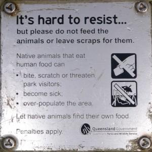 Feeding sign near Beerwah