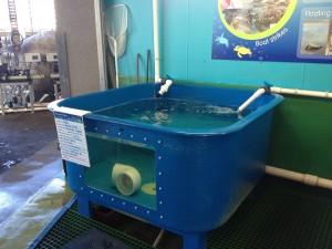 Reef HQ rehab turtle enclosure.