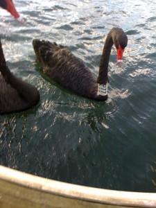 Swans collar_2elwood