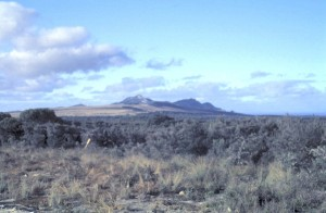 Typical heathland habitat for Flinders Island.