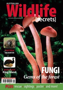 http://blog.wildlifesecrets.com.au/wildlife-secrets-magazine-vol-3-no-3/